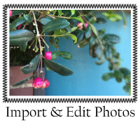 Import Photos