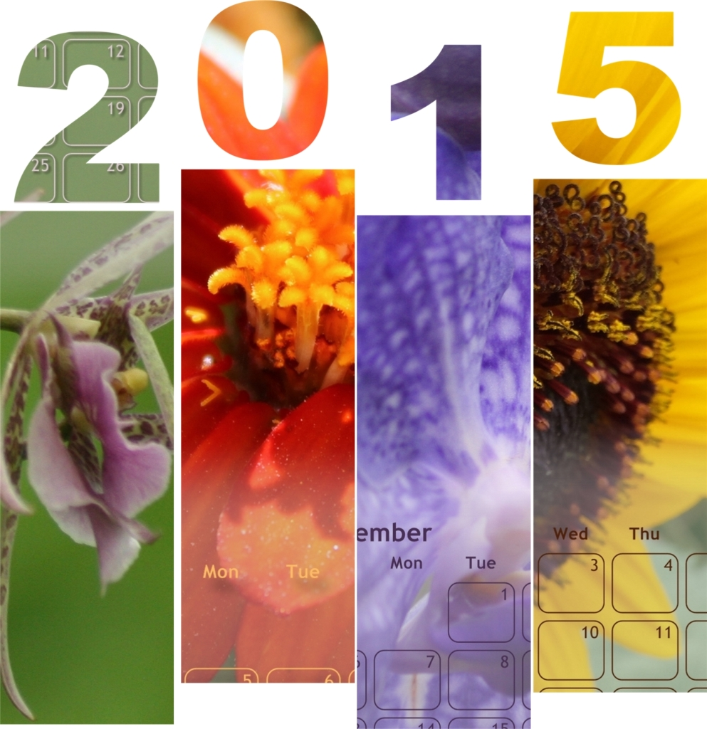 Check out this gorgeous printable 2015 flower photo calendar from Karen Fitting http://www.digitalscrapbookinghq.com/flower-calendar-karen-fitting/ #flowers #photography #2015 #calendar